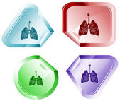 Lungs — Stock Vector