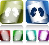 Kidneys — Stock Vector