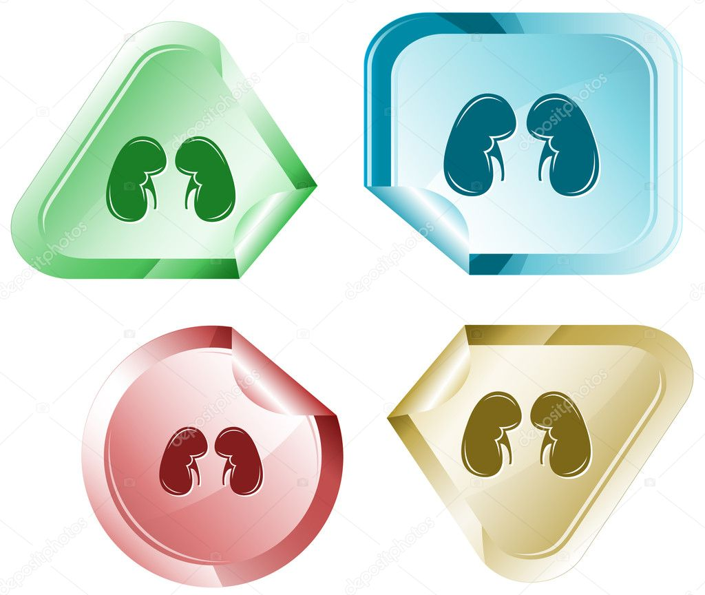 Kidneys. Vector sticker.  Stock Vector #6831880