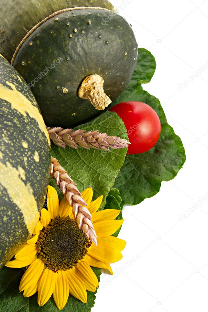 Autumn collection with pumpkin, herbs, sunflowers and ears  Stock Photo #6786862