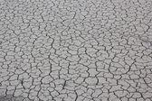 Cracked mud — Stock Photo