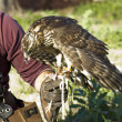 Falconer with raptor — Stock Photo #7764831