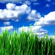 Stock Photo: Green grass and clouds