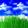 Close up of the green grass on white background — Stock Photo