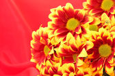 Flower on red background — Stock Photo
