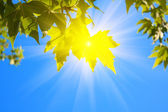 Green leaves and sun on sky background — Stock Photo