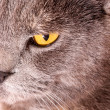 Cat eye closeup — Stock Photo