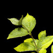 Plant on black background — Stock Photo