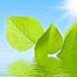 Green leaves in water on sky background — Stock Photo #6780904