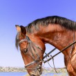 Horse portrait on river background - Stock Photo