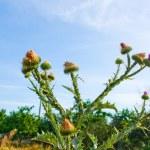 Green Plant — Stock Photo