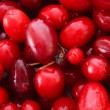 Stock Photo: Cranberries background