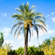 Palm with green trees on blue sky background — Stock Photo