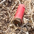 Shotgun cartridge on ground - Stock Photo