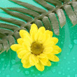 Stock Photo: Yellow chamomile on green background