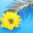 Stock Photo: Yellow chamomile on blue background