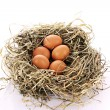 Bird nest with three eggs isolated on white — Stock Photo
