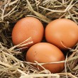 Bird nest with three eggs - Stock Photo