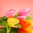 Tulips on red background — Stock Photo