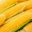 Yellow corns — Stock Photo