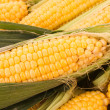 Stock Photo: Few yellow corn