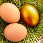 Gold egg in nest — Stock Photo