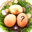 Gold  egg in nest. Ukrainian coins — Stock Photo