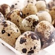 Quail eggs — Stock Photo #6788665