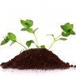 Three young plant in ground over white background — Stock Photo #6789710