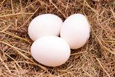 卵 3 個を干し草の背景 — ストック写真