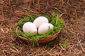 Eggs in hay — Foto Stock