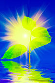Plant in water with sun background — Stock Photo