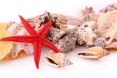 Seastar and few seashells isolated on white — Stock Photo