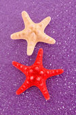 Seastar on purple background — Stock Photo