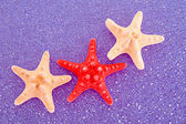 Seastar on blue background — Stock Photo