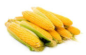 Few corn isolated on white — Stock Photo