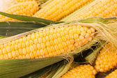 Few yellow corn — Stock Photo