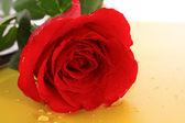 Rose on orange background — Stock Photo