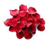 Rose petals — Stock Photo