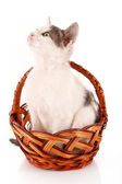 Small cat in basket isolated on white — Stock Photo