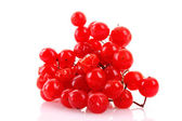 Red berries of viburnum isolated on white — 图库照片