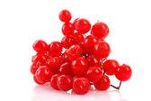 琼花在白色孤立的红色浆果 — 图库照片