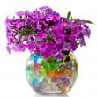 Beautiful flowers in vase — Stock Photo #6791003