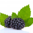 Stock Photo: Beautiful blackberries