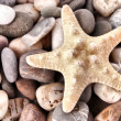 Royalty-Free Stock Photo: White Seastar on pebble background