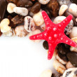 Stock Photo: Red seastar on pebble background