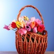 Tulips in basket on blue background — Stock Photo #6793738