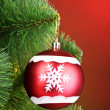 Stock Photo: Beautiful Christmas red ball on fir tree