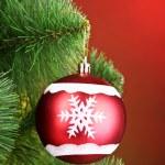 Beautiful Christmas red ball on fir tree — Stock Photo