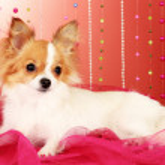 Funny little dog — Stock Photo #6794443